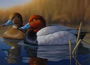 Ducks Unlimited Waterfowl Prints