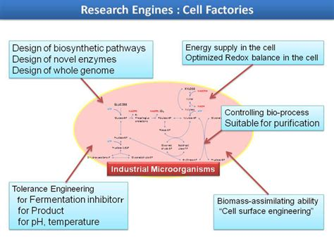 cell factories research innovative bioproduction kobe
