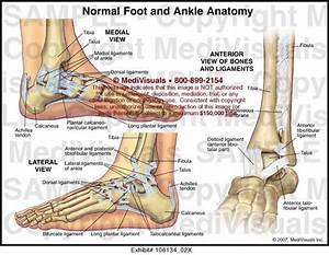 1000  Images About Achilla Tendon On Pinterest