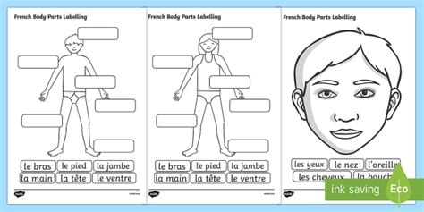 French Body Parts Labelling Worksheet  French, Body, Part