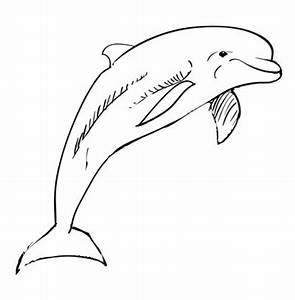 How to draw a dolphin | Sketchbook Ideas | Pinterest | How ...