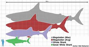 Carcharodon Megalodon  The  U0026quot Mega Shark U0026quot  Of The Cenozoic Era