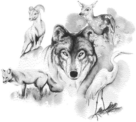animal drawings  drawing showcase