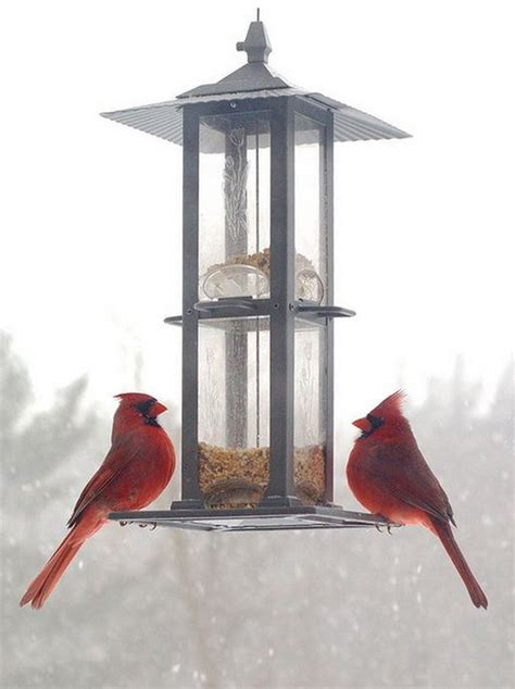 cardinal bird feeder bird feeders for cardinals and bluejays woodworking