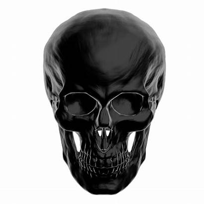 Skull Face Anatomy Skeleton Crossbones Female Anatomie