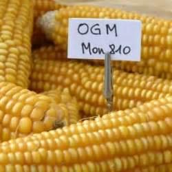 Alimenti Geneticamente Modificati L Italia Ha Scelto Niente Cibi Ogm Repubblica It