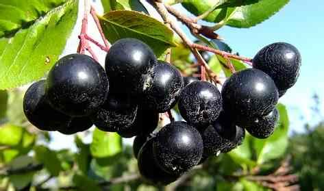 23 Types of Berries: List of Different Kinds of Berries
