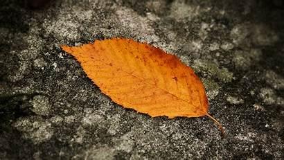 Macro Leaves Wallpapers Leaf Leave