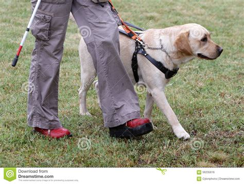 Blind Person Walking With Her Guide Dog Stock Photo