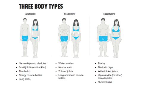 Body Types  Guidelines For Building Your Individual Plan. Sample One Page Resume. Format Of Making A Resume. Janitorial Resume Sample. Account Manager Resume Sample. Creative Resume Samples. Resume Active Verbs. Finance And Insurance Manager Resume. Sample Resume Australian Format