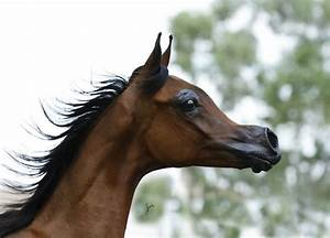 El Rey Magnum: Has the Selective Breeding of Horses gone ...