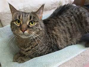 grey cat names gray and black tabby cat names