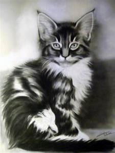 Plaid Noir Et Blanc : portraits animalier chat pastel noir et blanc fabiane ~ Dailycaller-alerts.com Idées de Décoration
