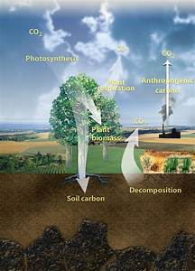 Carbon Cycling And Climate