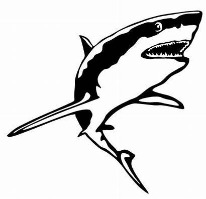 Shark Decal Vinyl Sticker Window Fish Funny