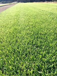 Gazon En Plaque : gazon bermuda grass jardin minute ~ Premium-room.com Idées de Décoration