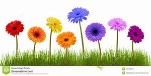Spring Flower And Grass Over White Stock Photo - Image of ...