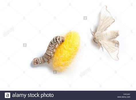 Grub Worm Stock Photos & Grub Worm Stock Images - Alamy