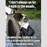 funny-dog-pictures-with-captions-for-kids