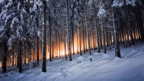nature landscape mountain trees forest winter