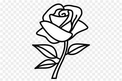Rose Drawing Bunga Daun Sketsa Rosa Dibujo