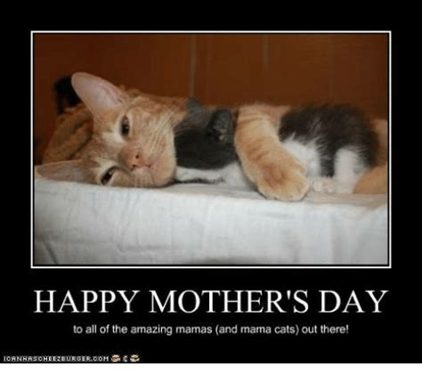 Meme Mothers Day - happy mother s day to all of the amazing mamas and mama cats out there cats meme on me me