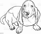 Hound Basset Dog Sitting Tongue Stick Drawing Drawings Line Coloring Illustration Vector Cartoon Maggie Mae Dogs Canine Animal sketch template