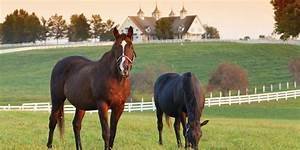Horse Property for Sale | Horse Farms & Horse Ranches ...