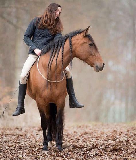 riding horse bareback horses tackless pretty percheron natural fall rider horseback boots ridden dressage being horsemanship bits drawings thoroughbred bridle