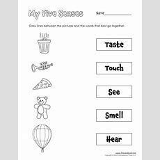 Five Senses Matching  Tim's Printables