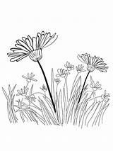 Grass Coloring Mycoloring Ausmalbilder Gras Printable Colors Malvorlagen Ausdrucken Kostenlos Zum sketch template