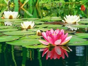 All About Aquatic Plants | Types of Water Plants | Petal Talk