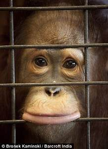 The zoo where 200 animals are kept caged and made to ...