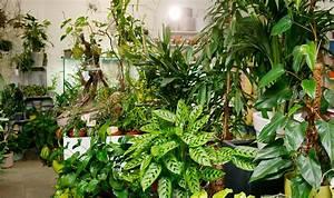 Online Pflanzen Kaufen : zimmerpflanzen in wien kaufen flowercompany ~ Watch28wear.com Haus und Dekorationen