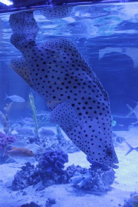 fish shark pet