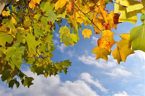 Garten Im Herbst Bearbeiten by Gartenbau Und Pflegeservice Pflanzen
