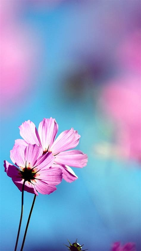 Find the best cell phone wallpaper pictures on getwallpapers. Flowers Wallpaper flowers phone wallpapers download pink ...