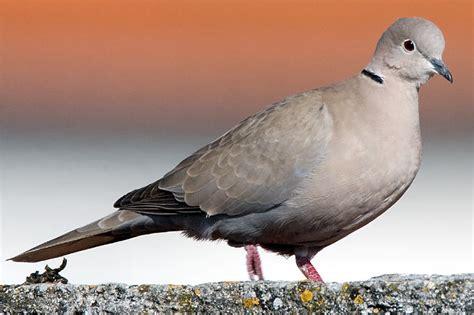 Leicht Zu Verwechseln Vögel Bestimmen Im Winter Nabu