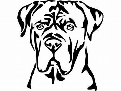 Cane Corso Dessin Chien Dog Mastiff Silhouette