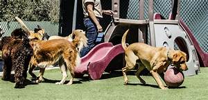 doggy daycare near me cypress tx dog39s day inn With dog care near me