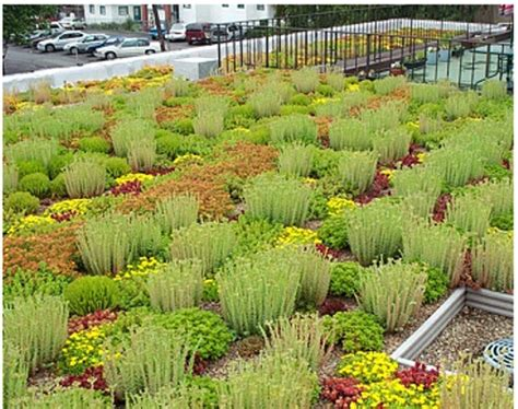 plants for rooftop gardens rooftop garden plants image search results
