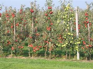 Fruitteelt - Wikipedia