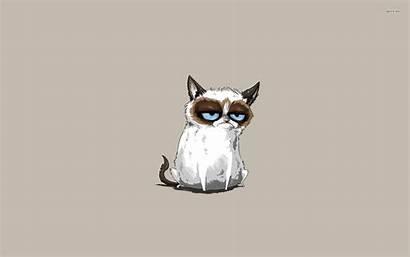 Cat Grumpy Meme Cartoon Pc Hipster Hintergrundbilder