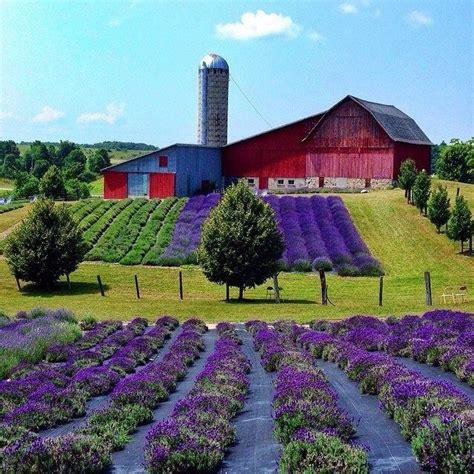 lavender hill farms boyne city michigan garden
