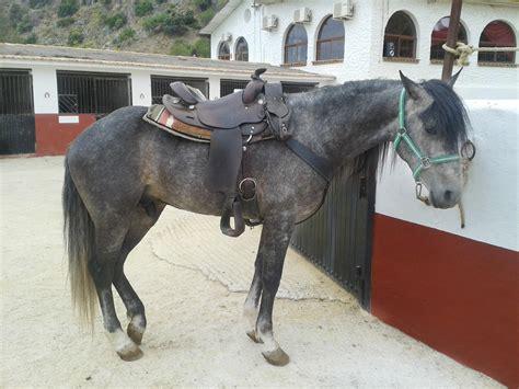 horse andalusian horses spanish malaga trekking mountains through spain dressage
