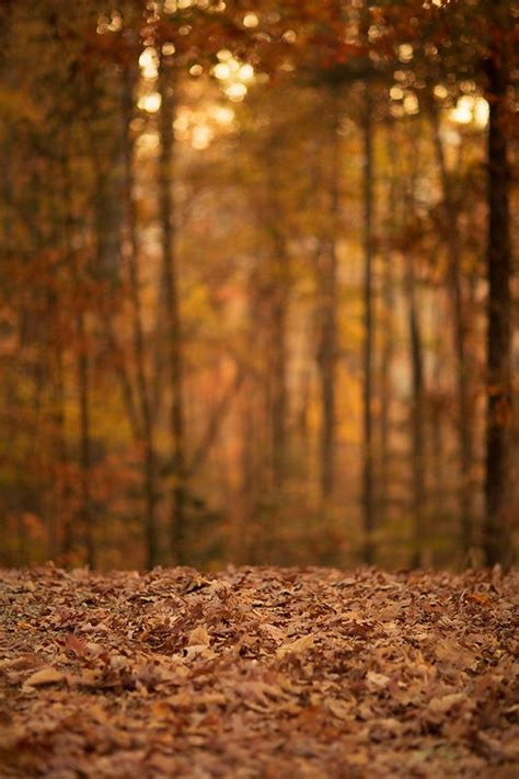Digital Photography Backgrounds by Fall Digital Backdrop Digital Backdrop Digital