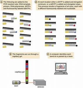 Visualizing And Characterizing Dna  Rna  And Protein