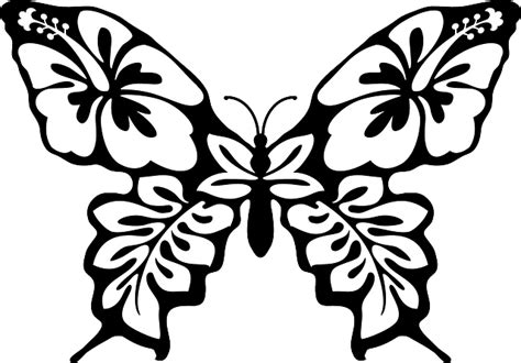 butterfly moth insect  vector graphic  pixabay