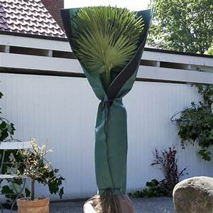 Palmen Für Drinnen : palmen stammschutz ~ Bigdaddyawards.com Haus und Dekorationen