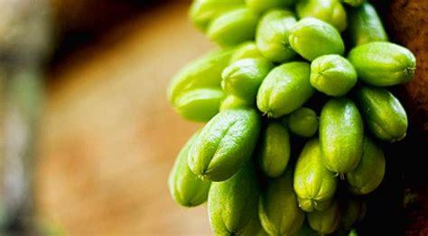 tanaman apotik hidup  manfaatnya part  viral
